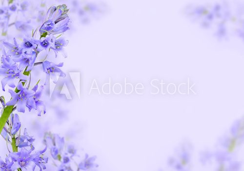Abstract purple spring flowers background