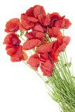 wild field  poppies bouquet