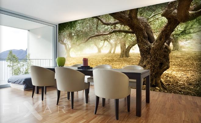 olivenb ume fototapeten landschaften fototapeten. Black Bedroom Furniture Sets. Home Design Ideas