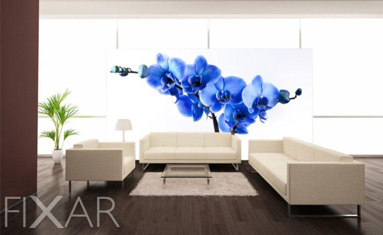 glanz einer orchidee fototapeten blumen fototapeten. Black Bedroom Furniture Sets. Home Design Ideas