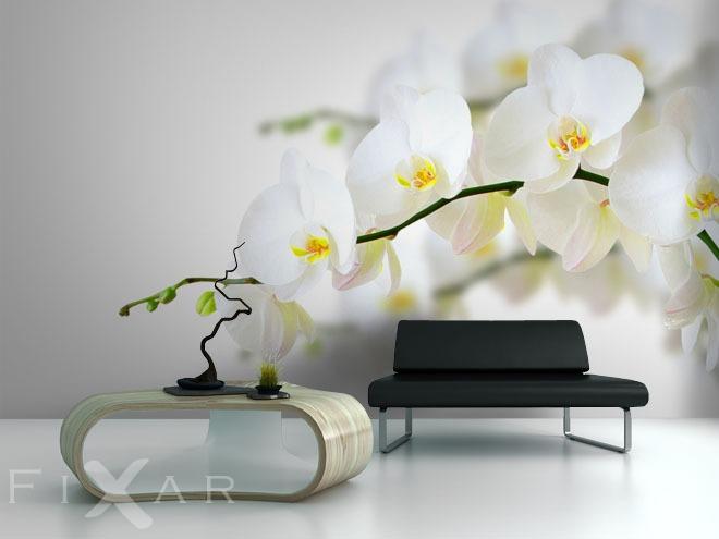 unter knabenkraut fototapeten orchidee fototapeten. Black Bedroom Furniture Sets. Home Design Ideas