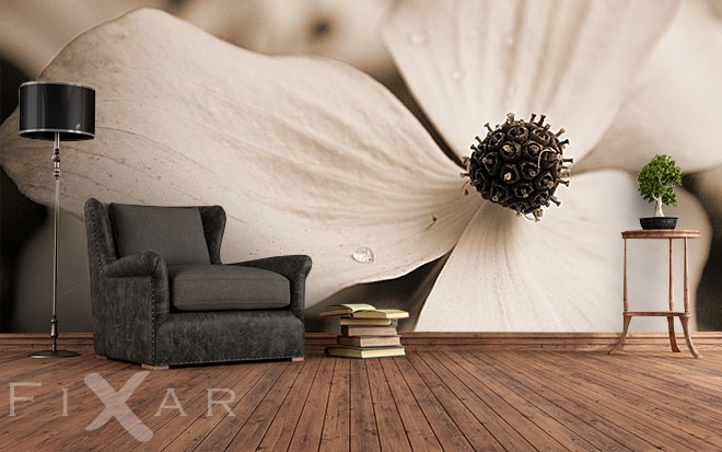 zarte blume sepia fototapeten. Black Bedroom Furniture Sets. Home Design Ideas