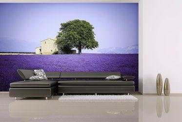Lavendeleingebung   Magie Der Farben