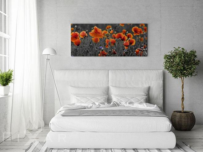 feld mit karotten die mohne in rostroter farbe poster und bilder fotopanorama bilder und. Black Bedroom Furniture Sets. Home Design Ideas